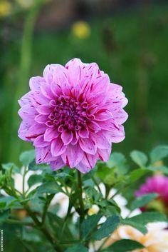 Flower 34 by Mohammad Azam