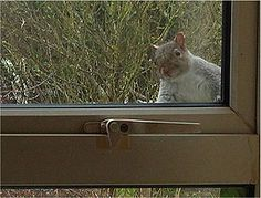So, I was fixing the bird feeder in the kitchen and...... !!!