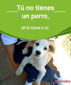 Tú no tienes un perro, ¡él te tiene a ti!  Te contamos el por qué se dice actualmente que no tienes un perro, él te tiene a ti. #perro #amor #dueño #consejos