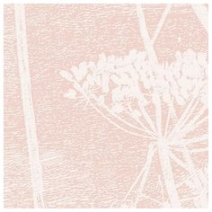 Papier peint - Cole and Son - Cow Parsley - rose ballerine