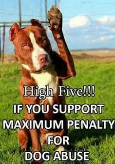 ** Or any animal abuse. Animal activists struggled to have it become a Felony in all 50 States, apparently, it's still up to the judge.