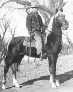Agazizz, 7700, chestnut Morgan stallion, b. 1936.