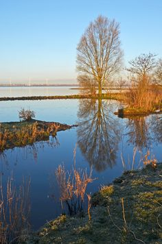 Tree reflected in Haringvliet, at Korendijkse Slikken, The Netherlands