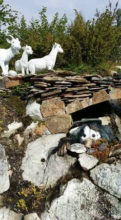 Bald Eagle, Montessori, Goats, Garden Sculpture, Bird, Outdoor Decor, Nature, Animals, Naturaleza