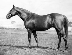 Sir Barton's Preakness was 1 miles, and his Belmont was 1 miles. In the latter race, Sir Barton faced only 2 opponents. Pretty Horses, Beautiful Horses, Animals Beautiful, Derby Horse, Triple Crown Winners, Horse Silhouette, Seattle, Sport Of Kings, Thoroughbred Horse