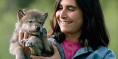 Jamie Dutcher with a young pup of the pack (© Jim & Jamie Dutcher/Nat Geo Stock/Caters News Agency)
