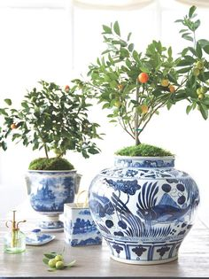 No need to go out and look for planters -- try using beautiful ceramics you already own for an extra-special touch for small potted indoor citrus plants. Shop more of our favorite Chinoiserie ginger jars here!