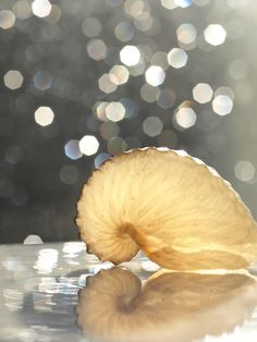 Nautilus Sparkles - ©Machel Spence Photography (via Society6)