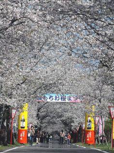 母智丘公園(宮崎県都城市)