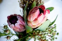 .. Rose, Flowers, Plants, Pink, Plant, Roses, Royal Icing Flowers, Flower, Florals