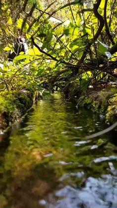 Water world. Photoshop Photography, Underwater Photography, Amazing Photography, Indian Photography, White Photography, Amazing Nature Photos, Cool Pictures Of Nature, Nature Photography Flowers, Landscape Photography