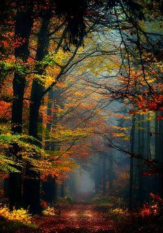 """""""Dᴏɴ'ᴛ. Lɪᴇ. Tᴏ ᴍᴇ."""", renamonkalou: Secret Places © Nelleke..."""