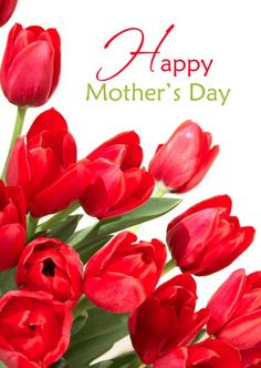 Good Morning Saturday, Good Morning Friends, Morning Msg, Happy Birthday Cards, Happy Mothers Day, Seasons, Rose, Flowers, Plants