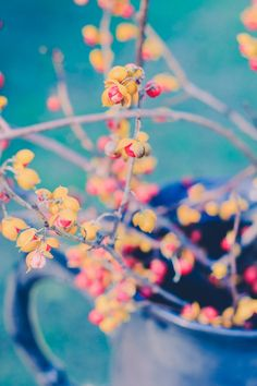 Fall Autumn Photography, Seasonal Decor, Nature Photography, Rustic Country Decor, Home Decor, Wall Art
