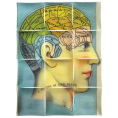 John Derian Company Inc — In Good Health (Phrenology Head)  decoupage in a um er of pieces