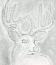 how to draw a deer step by step for beginners