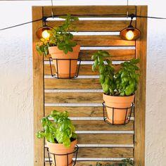 Hanging Herb Gardens, Vertical Herb Gardens, Hanging Herbs, Herb Garden In Kitchen, Diy Herb Garden, Kitchen Herbs, Garden Beds, Herb Planters, Indoor Planters