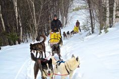 Dogsledding, skiing, art galleries, amazing local cuisine—you get the picture.