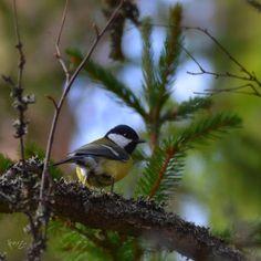 KATSE VASEMPAAN PÄIN: HERKKYYS JA DYSTONIA Nature Images, Nature Pictures, Finland, Hiking, Landscape, Animals, Life, Walks, Scenery