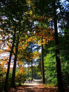 Zin in een herfstwandeling? Wandel de NS Wandeling Mastbos, mooie afwisseling tussen stad en bos.
