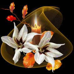 The perfect Flowers Animated GIF for your conversation. Discover and Share the best GIFs on Tenor. Fire Candle, Candle In The Wind, Flowers Gif, White Flowers, Beautiful Gif, Beautiful Flowers, Moving Pictures Gif, Glitter Graphics, Snowy Day