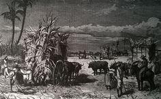 Recolección de azúcar en Cuba (Plumilla de La Ilustración Española y Americana).
