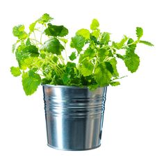 SOCKER Plant pot ~ IKEA $0.79 ~ would be great for storing little things in the bathroom
