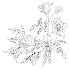 Alstroemeria De La Flor, Contorno Imagen de archivo - Imagen ...
