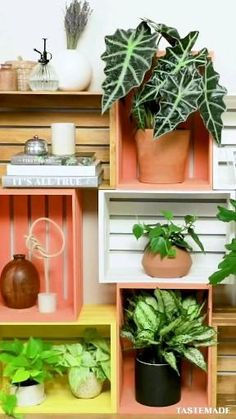 Easy Diy Room Decor, Diy Wall Decor, Diy Home Decor, House Plants Decor, Plant Decor, Diy Wooden Crate, Crate Bookshelf, Plant Shelves, Hanging Shelves