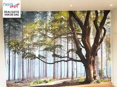 Fotobehang bos voor jouw slaapkamer Plants, Fairies, Walls, Posters, Home Decor, Faeries, Decoration Home, Room Decor, Wands