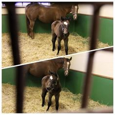 Filly by The Factor -- born at Lane's End