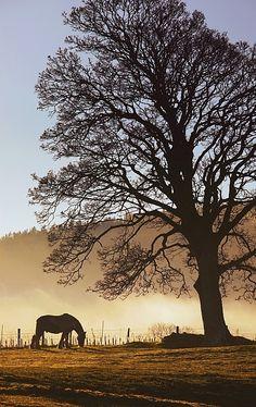 Northumberland, England; photo by John Short