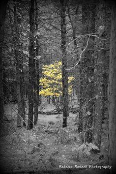 Michigan woods