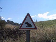 Passage de cochons ?