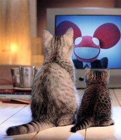 Kitties luv deadmau5