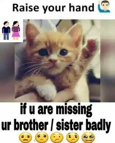 Trendy funny quotes and sayings family animal pictures Brother Sister Love Quotes, Brother And Sister Relationship, Missing You Brother, Sister Quotes Funny, Funny Quotes, Funny Sister, Daughter Poems, Quotes Quotes, Qoutes