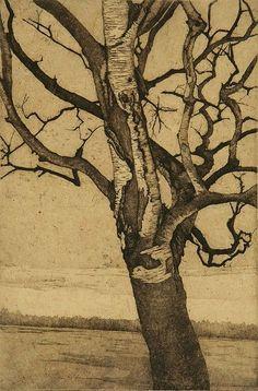 dappled with shadow: Anna McKee, Birch at Lake-1, etching, 2008