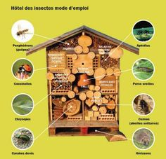 Insect hotel guide bug house