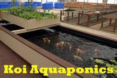 Building A Simple Koi Aquaponics Pond…