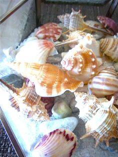 Easy Coastal Decor: Glass Boxes, Sand and Shells | Bonita Rose, Life.Love.Color.Art a life unrehearsed