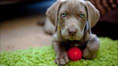Top 10 problemas de conducta en perros - HostalDog
