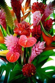 Resultado de imagem para bouquet de fleurs martinique