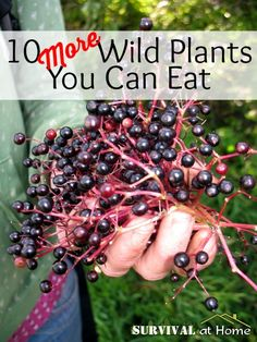 10 More Wild Plants You Can Eat