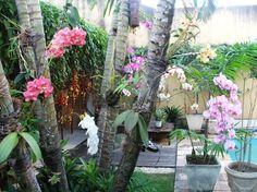 orquideas em arvores
