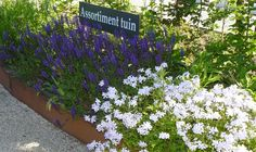 Modeltuinen: tuinideeën van Abrahams Hoveniers inspireren
