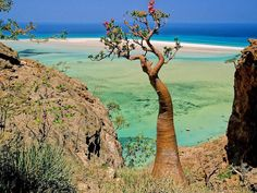 """Isolated Island with Strange Plant Life is """"The Most Alien-Looking Place on…"""