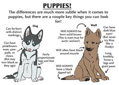 This will help with differences (wolf) Animals And Pets, Funny Animals, Cute Animals, Drawing Tips, Drawing Reference, Anatomy Reference, Animal Drawings, Art Drawings, Drawing Animals