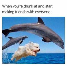 drunk af indeed   TrendUso    #drunk #alcohol #alcohols #beer #beers #whiskey #wine #brandy #dog #dogs #dolphin #dolhpins #funny #hilarious #humor #humorous #humour #meme #memes #memesdaily #lol #wtf #omg #relatable
