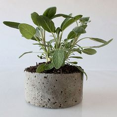 I love this stone planter at terrain. do you know how cheap this would be to diy though?