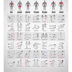 Defining bodyweight exercises by muscle type.